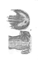 Стр. 207