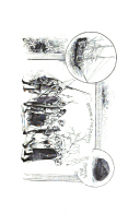 Стр. 342